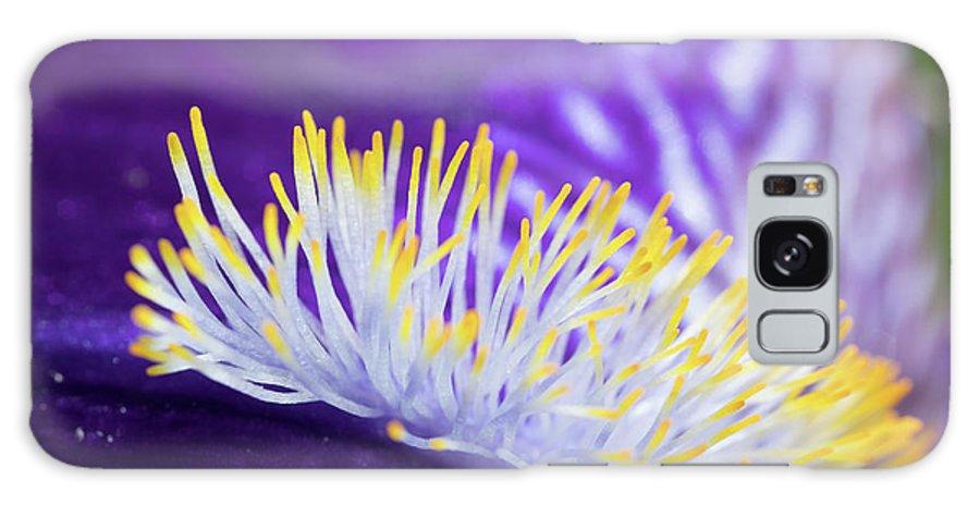 Bearded Iris Galaxy S8 Case featuring the photograph Bearded Iris Macro by Bernard Lynch