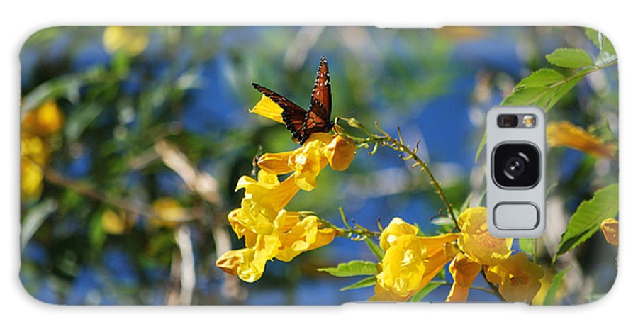 Butterfly Galaxy S8 Case featuring the photograph Beautiful Butterfly by Donna Greene