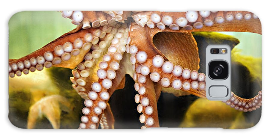 Octopus Galaxy S8 Case featuring the photograph Beautiful Octopus by Marilyn Hunt