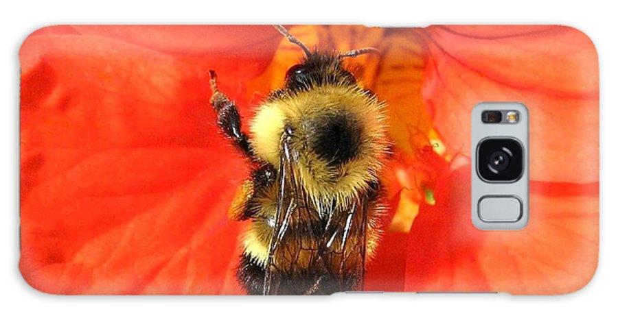 Bee Galaxy S8 Case featuring the photograph Bee And Nasturtium by Will Borden