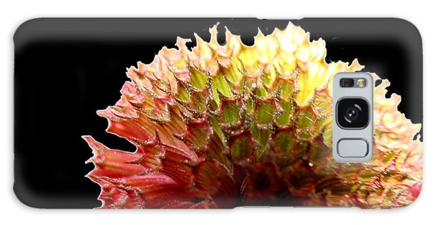 Bee Balm Galaxy S8 Case featuring the photograph Bee Balm by Diane Merkle