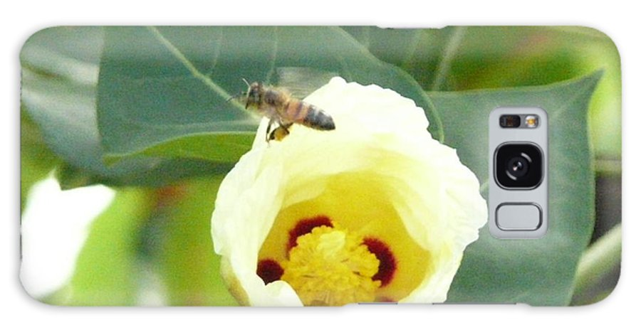 Bee Plants Tropical Galaxy S8 Case featuring the photograph Bee Chowtime by Robert aka Bobby Ray Howle