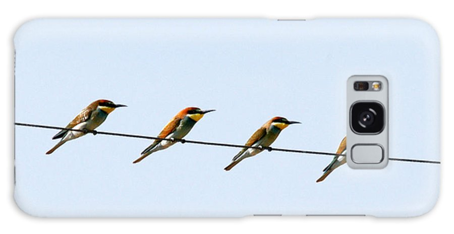 Bee Eaters Galaxy S8 Case featuring the photograph Bee Eaters On A Witre by Cliff Norton