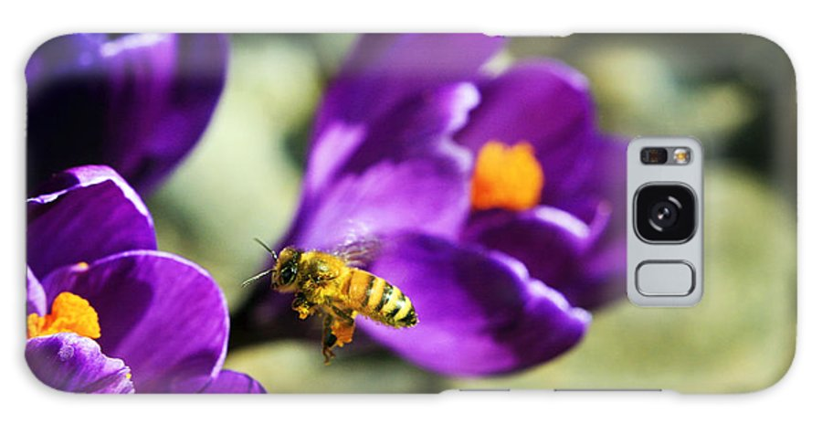 Bee Galaxy S8 Case featuring the photograph Bee In Flight by Marilyn Hunt