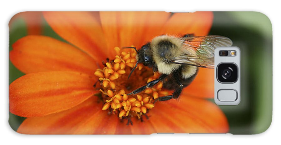 Bee Galaxy Case featuring the photograph Bee On Aster by Margie Wildblood
