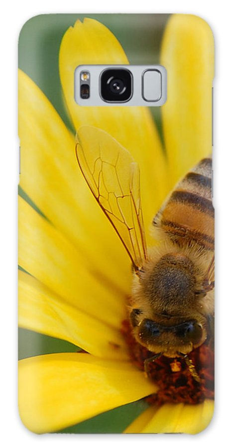 Bee Galaxy Case featuring the photograph Bee On Flower by Amy Fose