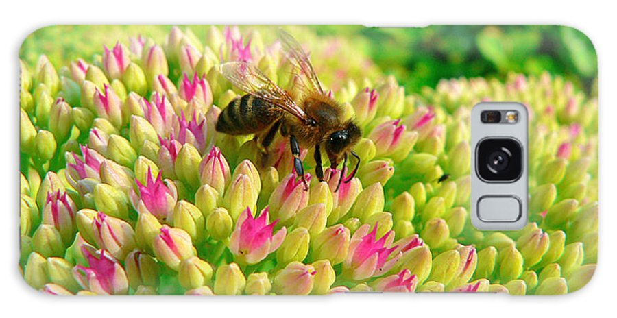 Flowers Galaxy S8 Case featuring the photograph Bee On Flower by Larry Keahey