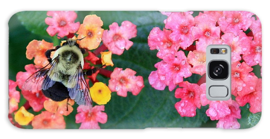Bee Galaxy S8 Case featuring the photograph Bee On Rainy Flowers by Carol Groenen