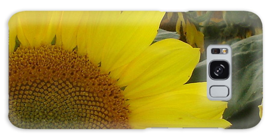 Bee's Galaxy S8 Case featuring the photograph Bee On Sunflower 1 by Chandelle Hazen