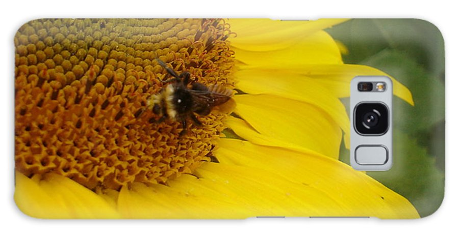 Bee Galaxy Case featuring the photograph Bee On Sunflower 3 by Chandelle Hazen