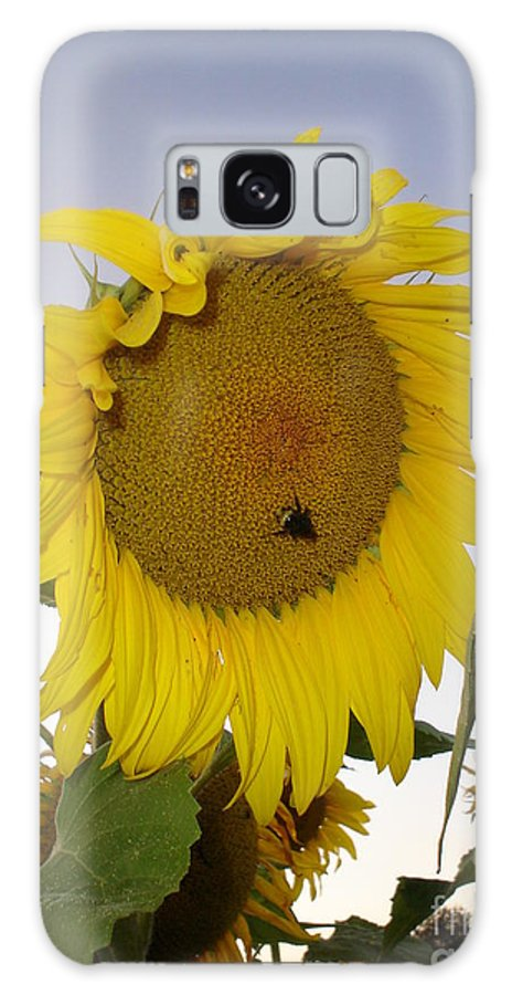 Bee On Sunflower Galaxy S8 Case featuring the photograph Bee On Sunflower 5 by Chandelle Hazen