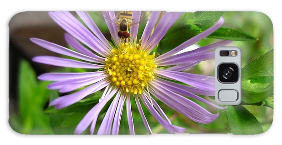 Bee Galaxy Case featuring the photograph Bee On Wildflower by Melissa Parks