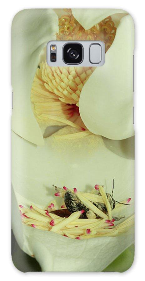 Magnolia Galaxy S8 Case featuring the photograph Bee Pollen Overdose by Deborah Benoit