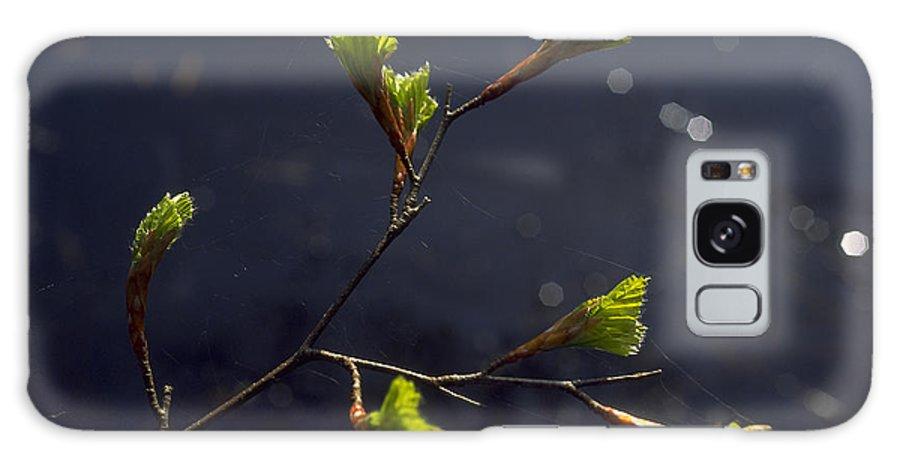 Green Galaxy S8 Case featuring the photograph Beech Buds by Michael Mogensen