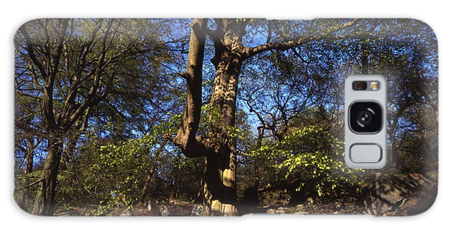 Beech Tree Galaxy S8 Case featuring the photograph Beech Trees Coming Into Leaf In Spring Padley Wood Padley Gorge Grindleford Derbyshire England by Michael Walters