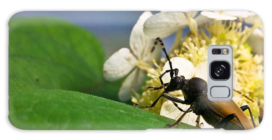 Crossville Galaxy S8 Case featuring the photograph Beetle Preening by Douglas Barnett