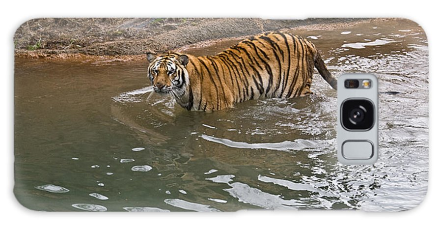 Bengal Galaxy S8 Case featuring the photograph Bengal Tiger Wading Stream by Douglas Barnett