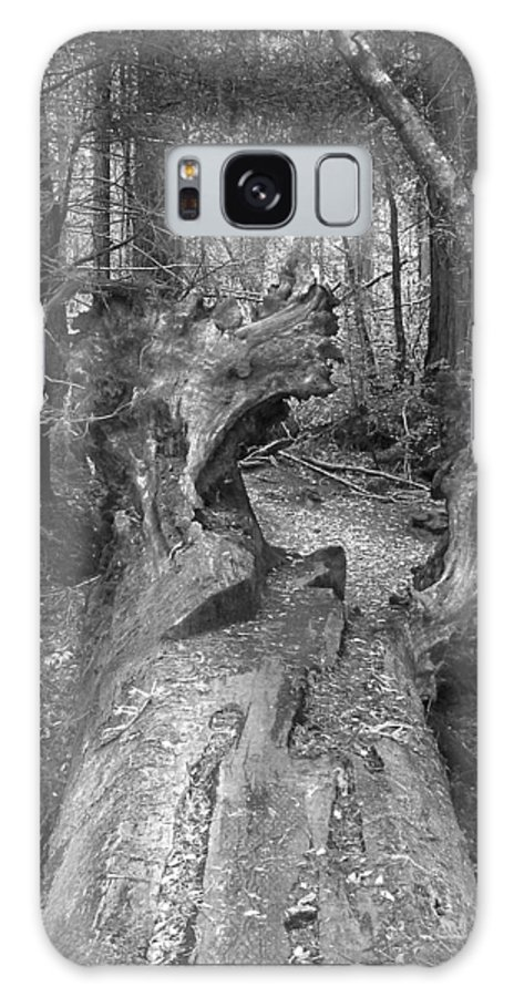 Landscape Galaxy S8 Case featuring the photograph Big Basin 2 by Karen W Meyer