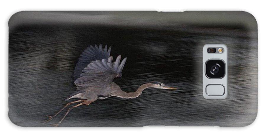 Bird Galaxy S8 Case featuring the photograph Big Blue Heron In Flight-debbie-may by Debbie May
