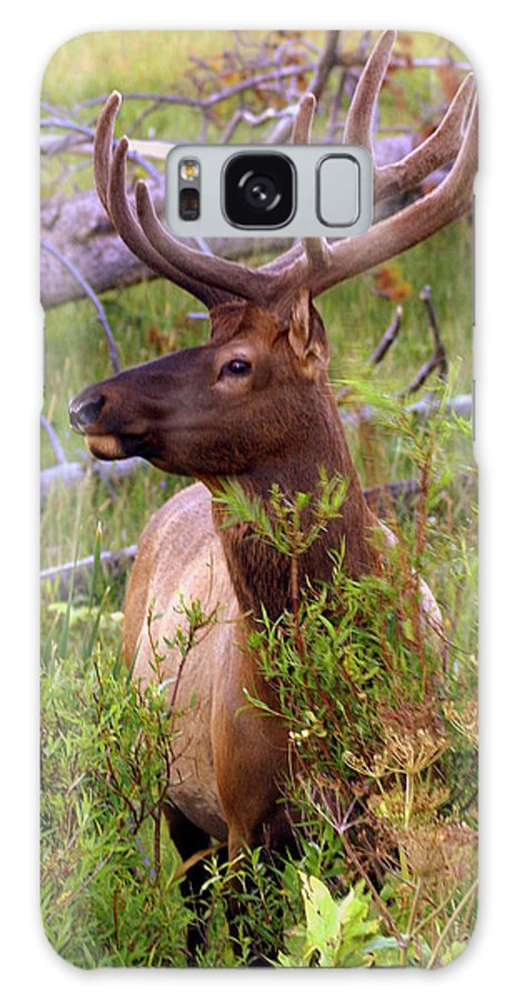 Bull Elk Galaxy S8 Case featuring the photograph Big Bull by Marty Koch