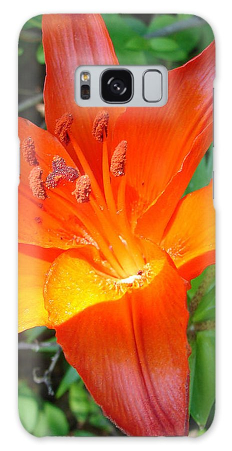 Orange Flower Yellow Galaxy Case featuring the photograph Big Orange by Luciana Seymour