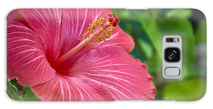 Hibiscus Galaxy S8 Case featuring the photograph Big Pink Hibiscus by Jade Moon