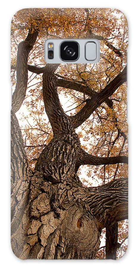 Giant Galaxy S8 Case featuring the photograph Big Tree by James BO Insogna