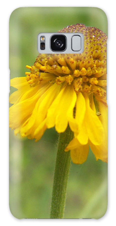 Flower Galaxy S8 Case featuring the photograph Bigelow by Amy Fose