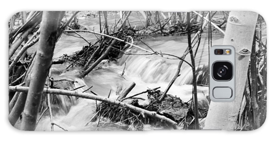 Woods Galaxy S8 Case featuring the photograph Birch And Stream by Anna Lucas