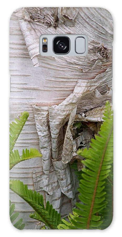 Tree Galaxy S8 Case featuring the photograph Birch Fern by Gale Cochran-Smith