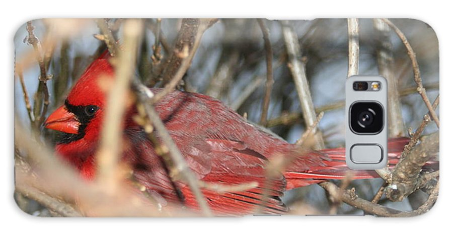 Northern Cardinal Galaxy S8 Case featuring the photograph Bird In A Bush by Diane Merkle