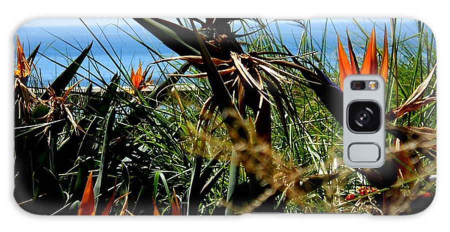 Bird Of Paradise Galaxy S8 Case featuring the photograph Bird Of Paradise By The Sea by Eve Paludan
