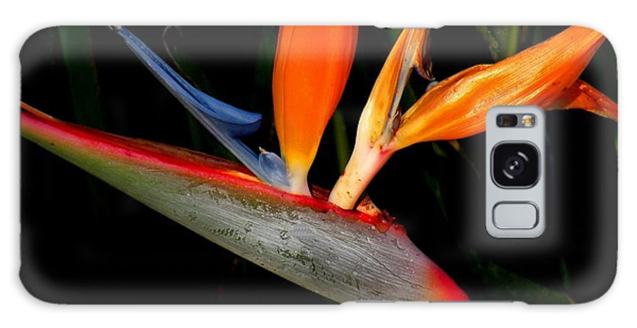 Flowers Galaxy S8 Case featuring the photograph Bird Of Paradise by Rosalie Scanlon