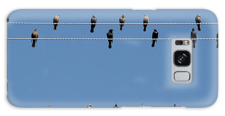 Birds Galaxy Case featuring the photograph Bird On A Wire by Christine Till