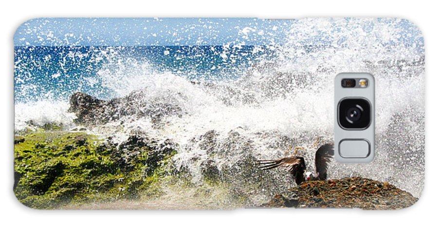 Bird Galaxy S8 Case featuring the photograph Bird On Rock by Katherine Erickson
