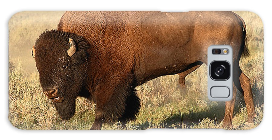 Bison Galaxy Case featuring the photograph Bison Huffing And Puffing For Herd by Max Allen