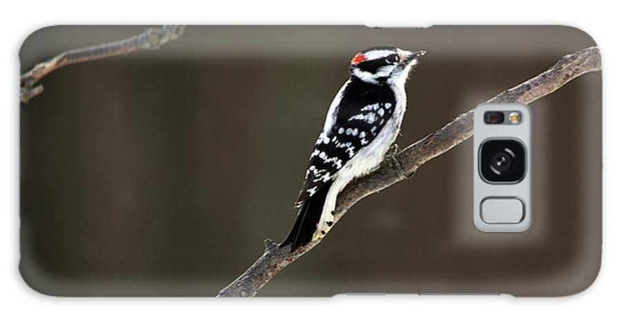 Downy Woodpecker Galaxy S8 Case featuring the photograph Bit Of Red by Linda Kerkau