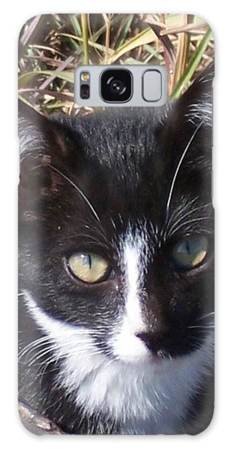 Cat Galaxy Case featuring the photograph Black And White Cat by Emily Young