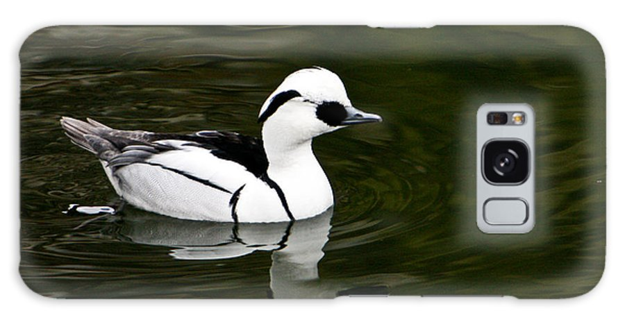 Duck Galaxy Case featuring the photograph Black And White Duck by Douglas Barnett