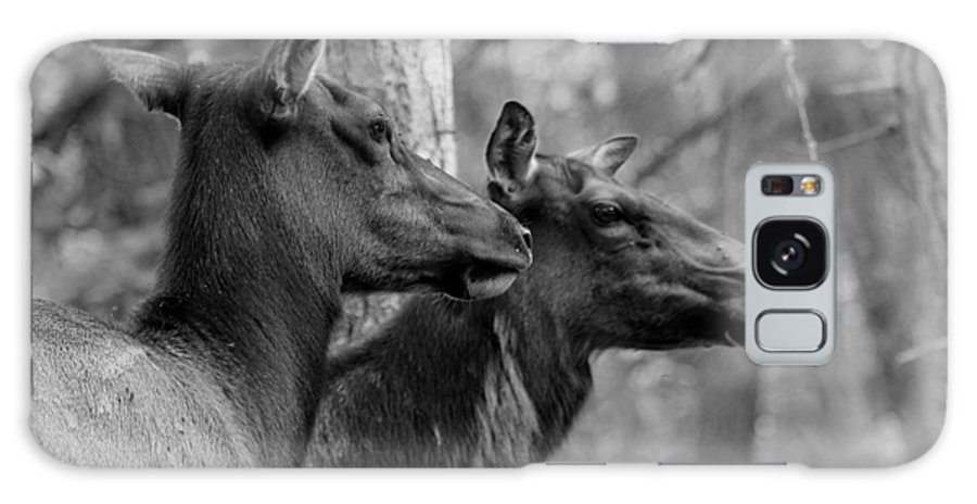 Black And White Galaxy S8 Case featuring the photograph Black And White Elk by Steve McKinzie