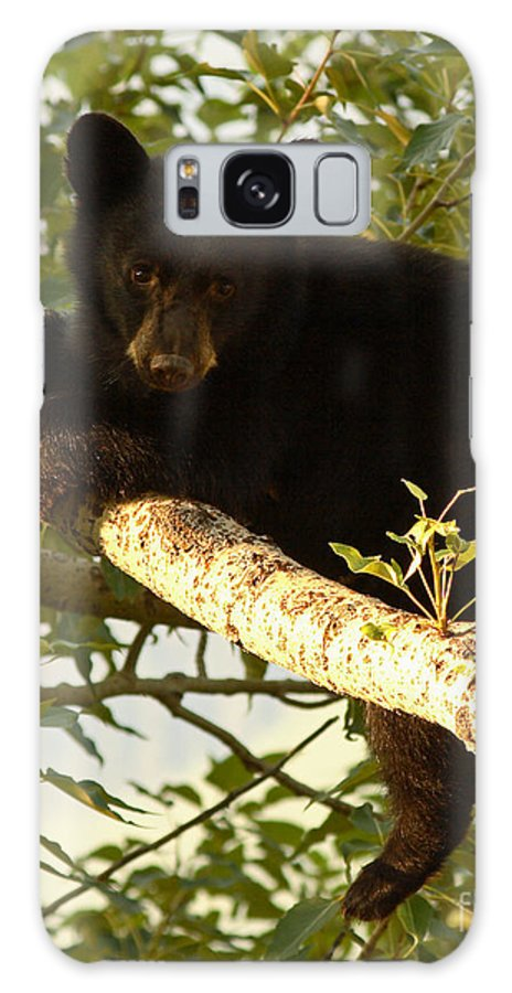 Bear Galaxy Case featuring the photograph Black Bear Cub Resting On A Tree Branch by Max Allen