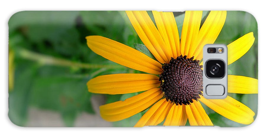 Black Eyed Susan Galaxy S8 Case featuring the photograph Black Eyed Susan by Denise Jenks