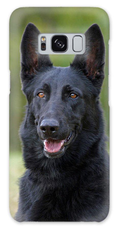 German Shepherd Galaxy S8 Case featuring the photograph Black German Shepherd Dog by Sandy Keeton