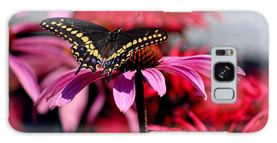 Insect Galaxy S8 Case featuring the photograph Black Swallowtail Butterfly With Coneflowers And Bee Balm by Karen Adams