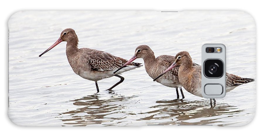 Godwit Galaxy S8 Case featuring the photograph Black-tailed Godwits by Bob Kemp