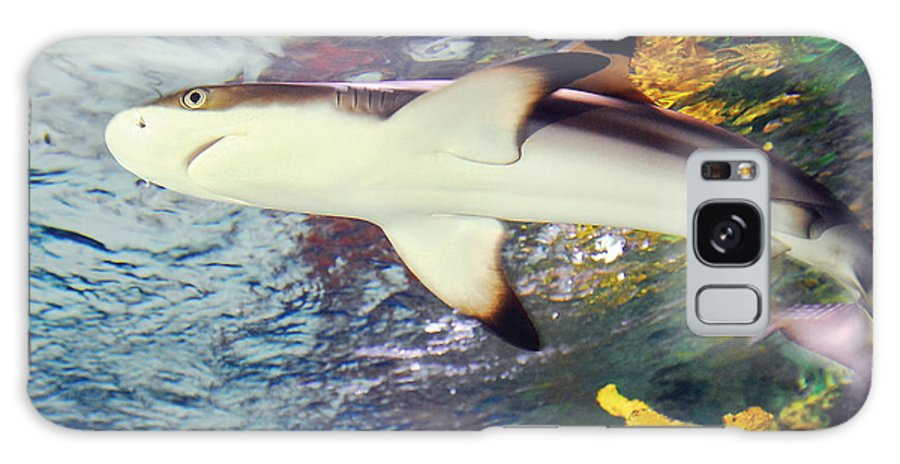 Black Tipped Reef Shark Galaxy S8 Case featuring the photograph Black Tipped Reef Shark by Steve Somerville