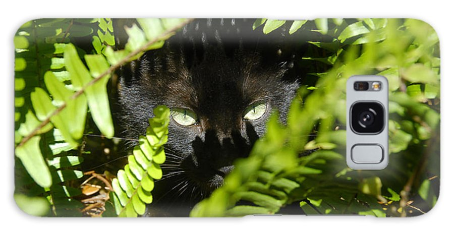 Cat Galaxy S8 Case featuring the photograph Blackie In The Ferns by David Lee Thompson