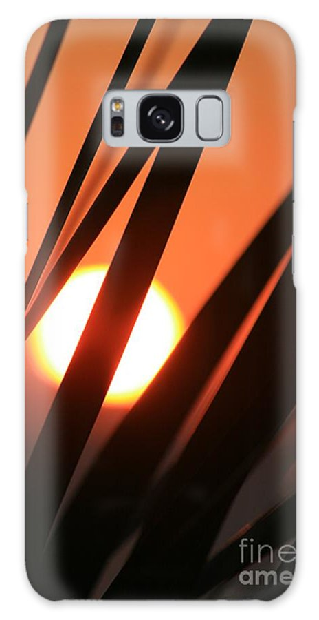 Sun Galaxy S8 Case featuring the photograph Blazing Sunset And Grasses by Nadine Rippelmeyer