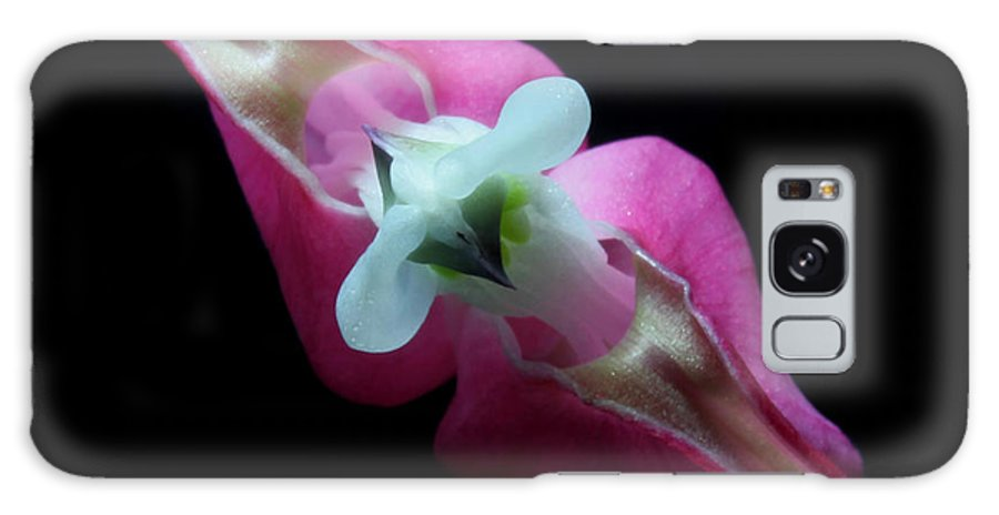 Nature Galaxy S8 Case featuring the photograph Bleeding Heart 2011-4 by Robert Morin