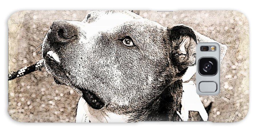 Dog Galaxy S8 Case featuring the photograph Blizzard by Joyce Baldassarre